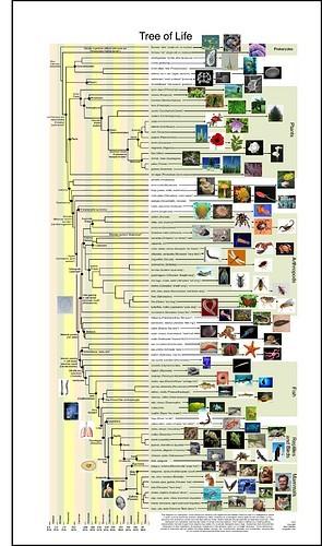 tree of life evolution. Tree of Life: